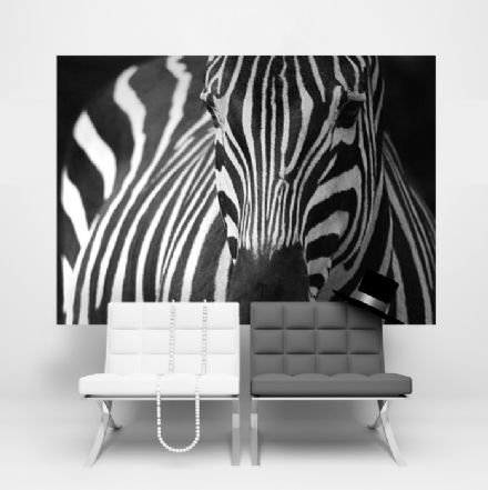 Wild zebra wallpaper for wall - S